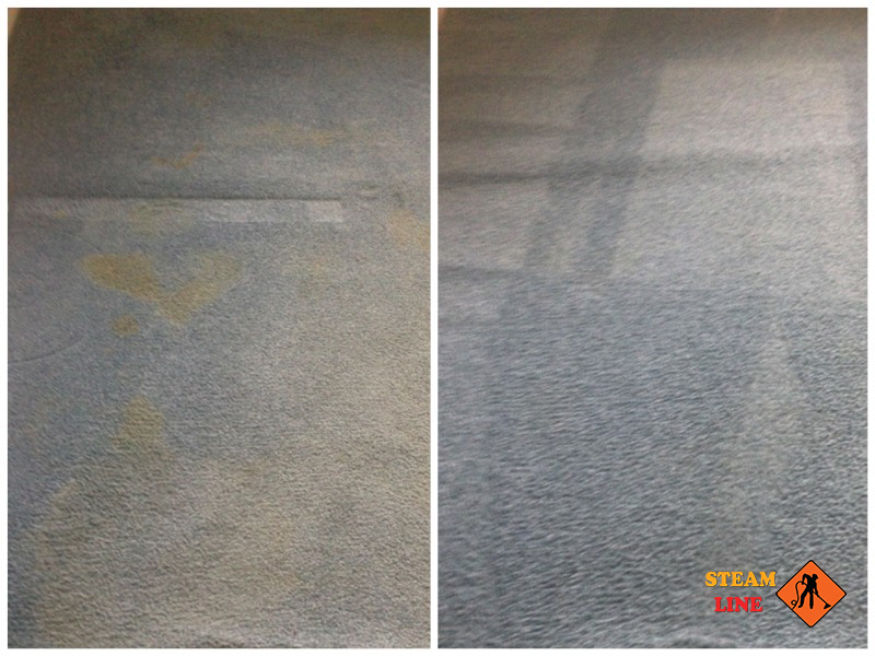 Chesterfield pet stains cleaning