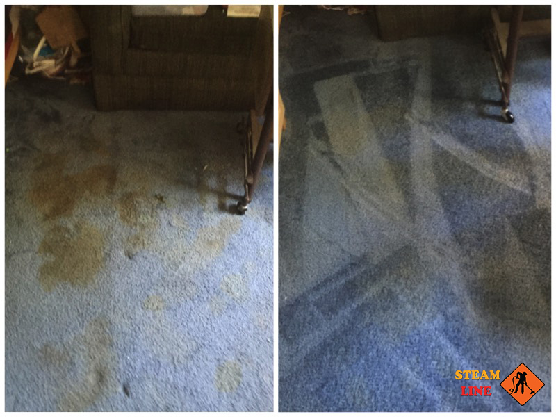 Glen Allen pet stains cleaning and odor removal