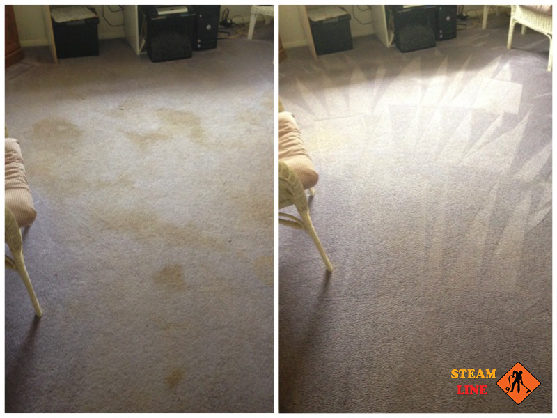 Midlothian pet stains cleaning and odor removal